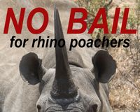 NO BAIL FOR RHINO POACHERS