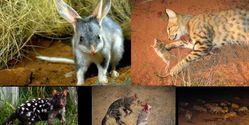 Save the Native Animals of NSW, Australia