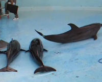 Protect Dolphins from Cruel Tank Cleaning