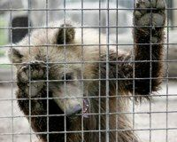 Ohio: Stop the Dangerous Sale of Exotic Pets