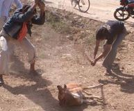 Youngsters beating a dog to death