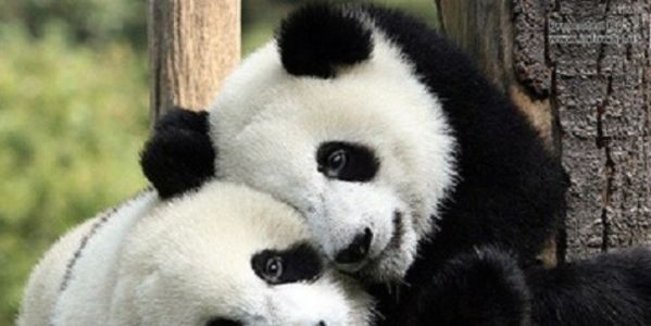 Ask China punish people who eat endangered animals!