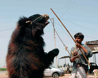 Tell Bulgaria that abuse of bears must be stopped!