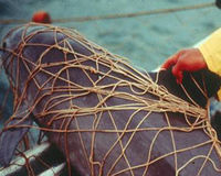 Protected Reserves for Critically Endangered Vaquita Porpoises