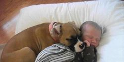 STOP THE UNJUST EUTHANIZING OF FOUR BOXERS
