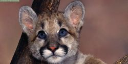 Say NO to new Power Plant in Florida Panther habitat!