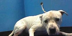 Demand the Governor of New York to end the mass killing of dogs in NYACC.