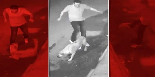 Turkey - Investigate & Charge Man Kicking & Strangling Stray Dogs!