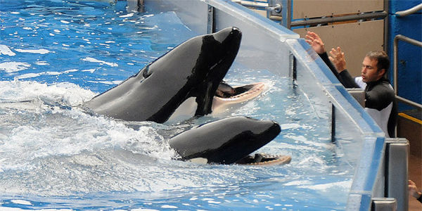 stop the cruelty at Sea World