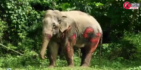 Elephants with injuries after being struck by train