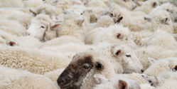 Save Animals from Live Export Cruelty!