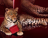 Ask Cartier to stop using endangered leopards in their advertising