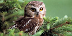 Ban Owl Killing Chemicals
