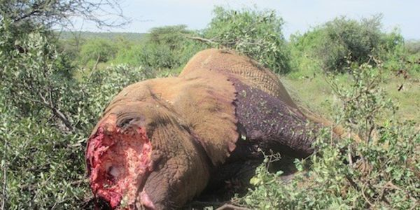Ask America's Auction Network to stop seliing ivory and conducting