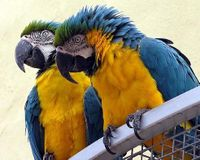 Stop Export Permits for Macaws