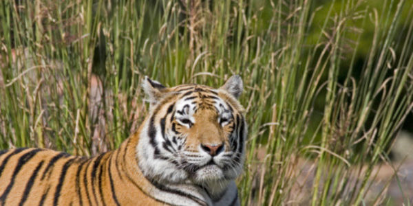 India - Stop Illegal Quarrying Near Tipeshwar Wildlife Sanctuary