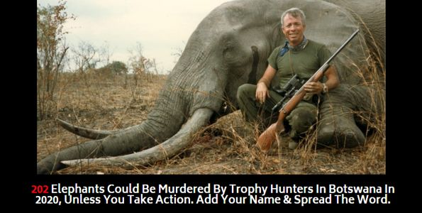 trophy hunter standing next to dead elephant