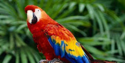 Stop the Export of Endangered Macaws