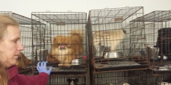 Demand shut down of puppy mill in Caledonia, Illinois & Bar Her from Owning Any Pets, Ever!!