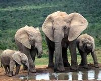 Don't Destroy Endangered Elephant Habitat