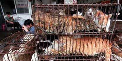SAVE Dogs and Cats from Chinese Fur Farms