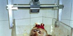 Stop Air France Shipping Primates!