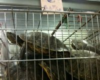 Stop Killing Our Turtles at Live Food Markets