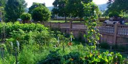 Save Ithaca's Community Gardens!