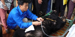 Ban The Cruel Bear Bile Industry