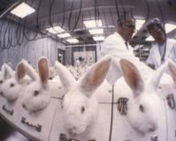show pictures of abused animals on some products that are tested in animals