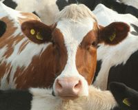 We Want Certified Humane® Dairy Products