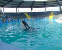 Please save Lolita!