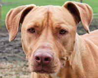 Justice for Tame Pit Mix Murdered By Police
