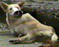 STOP THE ANIMAL ABUSE IN CHINA AND PHILLIPINES