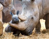 Keep Ban on Rhino Horns