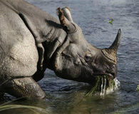 Killing Endangered Rhinos is NOT