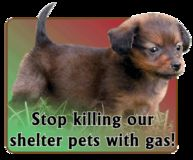 Stop gassing in animal sheltars
