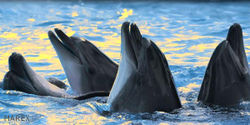 Taiji Museum, Don't Kick Out Anti-Whaling Activists!