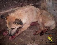 Petition for: Animal Cruelty Prevention Act