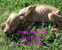 Make animal abuse laws more strict & enforce!!