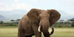 Tell GoDaddy CEO Bob Parsons: Stop Shooting Elephants
