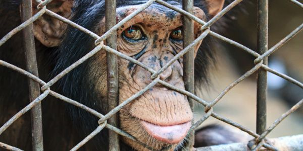 Congress: Protect Primates from the Pet Trade