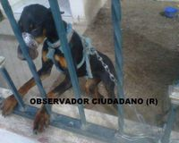 Petition to Save the Doberman Dog With Duct Taped Mouth in Mexico