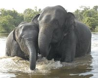 Save Cambodia's Elephants From New Titanium Mine