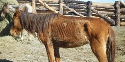 Mandatory Jail Time For Equine Abuse and Neglect