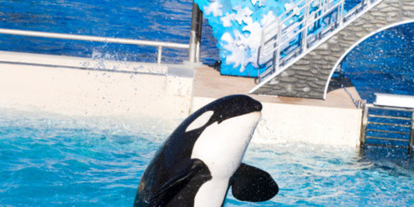 Tell SeaWorld to Keep Trainers Out of Orca Tanks!