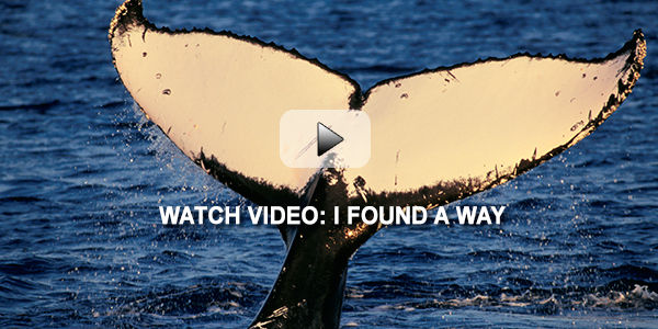 Pledge to Find a Way for a Safer World for Whales