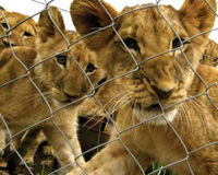Ban Canned Hunting in Arizona