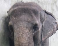 HELP RESCUE MALI THE WORLD'S LONELIEST ELEPHANT IN THE PHILIPPINES