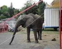 URGENT please sign to save TANYA the elephant from execution.